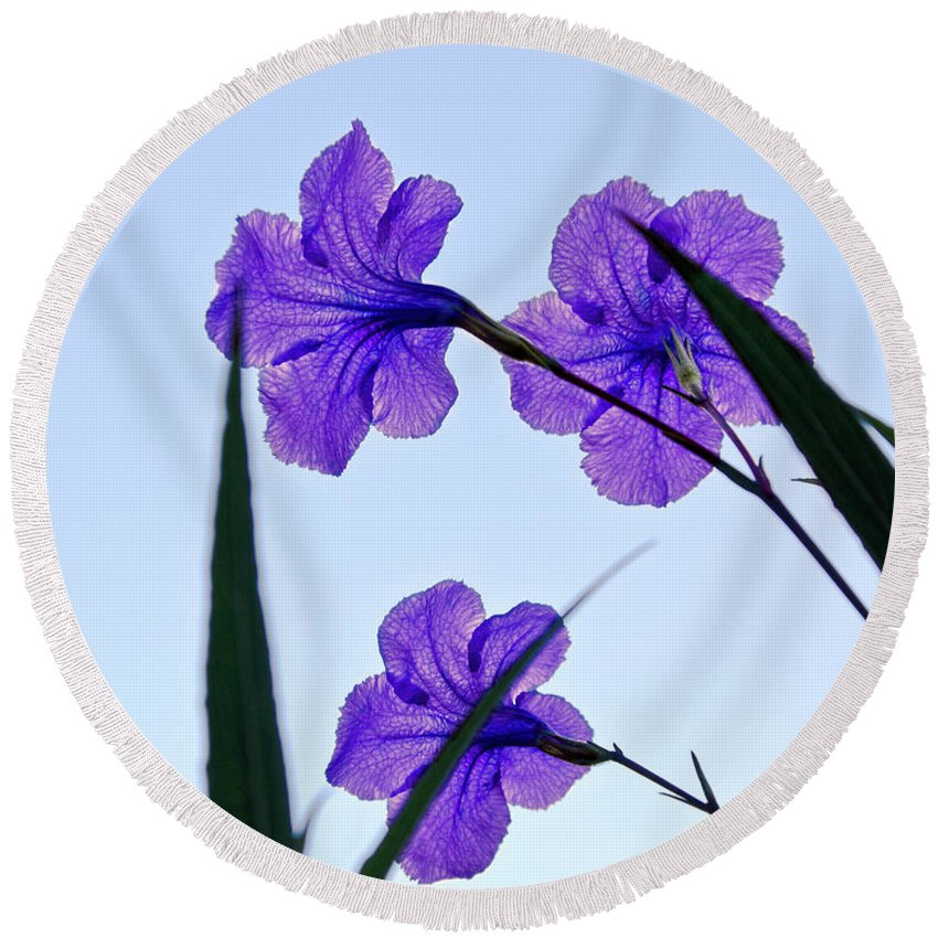 Flower Round Beach Towel featuring the photograph Purple Trio by Christopher Holmes