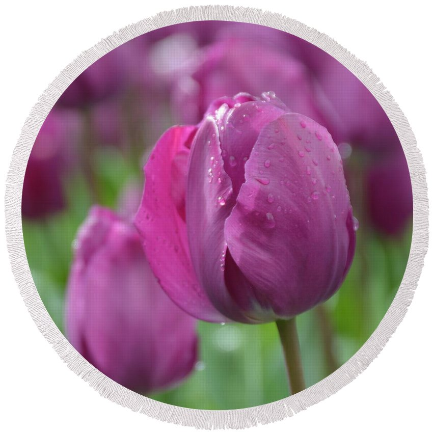 Tulip Round Beach Towel featuring the photograph Purple Tulip With Water Drops by Lena Photo Art