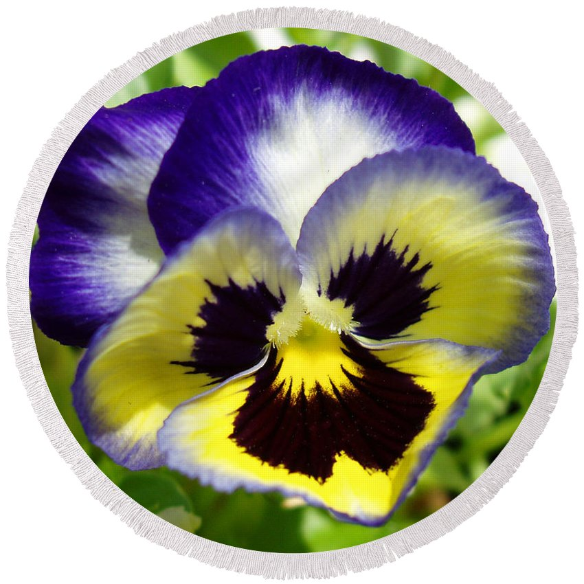 Pansy Round Beach Towel featuring the photograph Purple White and Yellow Pansy by Nancy Mueller