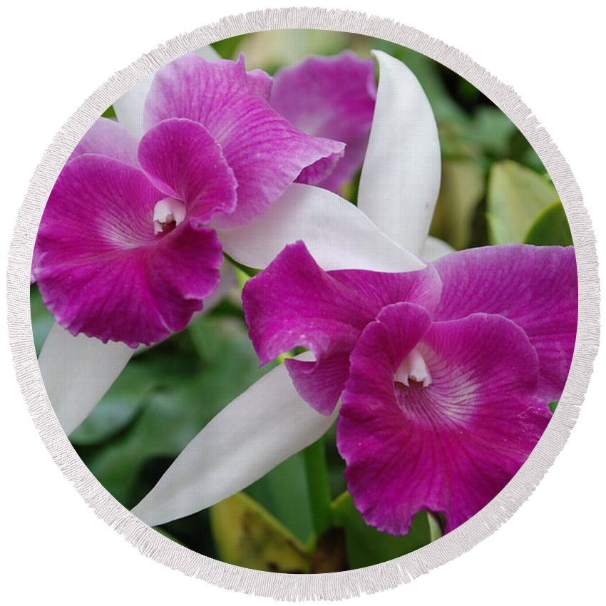 Macro Round Beach Towel featuring the photograph Purple White Orchids by Rob Hans