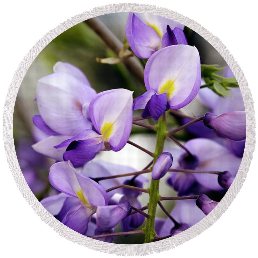 Wisteria Round Beach Towel featuring the photograph Purple Wisteria by Greg Reed