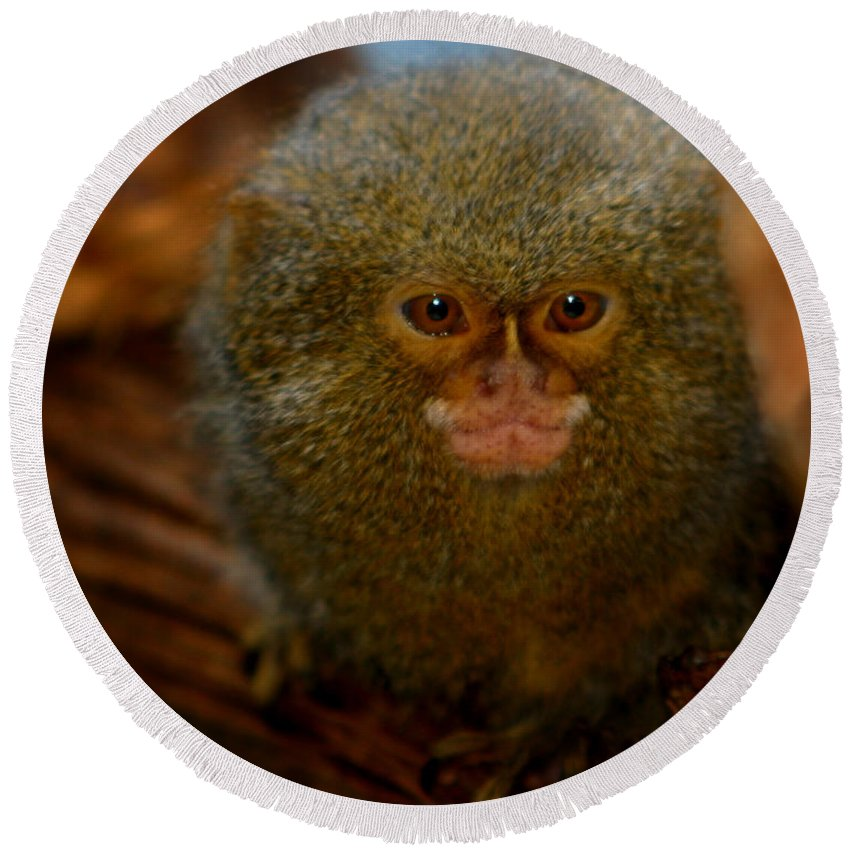 Pygmy Marmoset Round Beach Towel featuring the photograph Pygmy Marmoset by Anthony Jones
