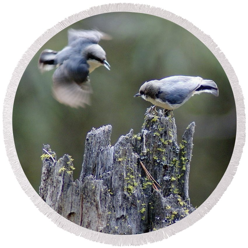 Birds Round Beach Towel featuring the photograph Pygmy Nuthatch In Flight by Ben Upham III