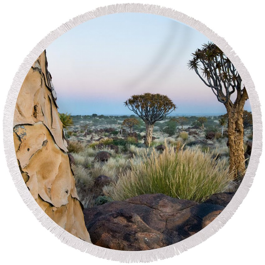 Photography Round Beach Towel featuring the photograph Quiver Tree Aloe Dichotoma, Quiver Tree by Panoramic Images