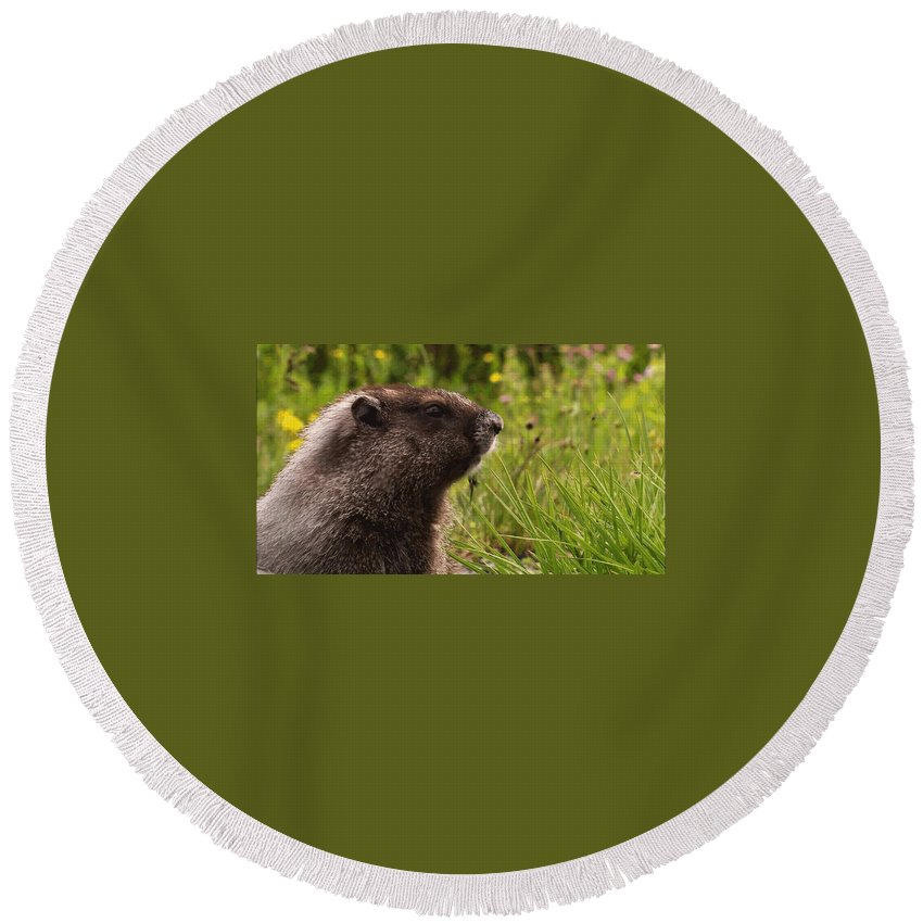 Round Beach Towel featuring the photograph Rabbit by Raymond Dunkwu