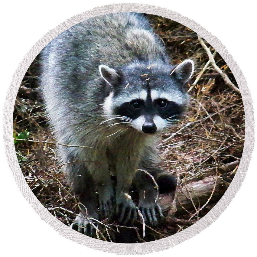 Painting Round Beach Towel featuring the photograph Raccoon by Anthony Jones