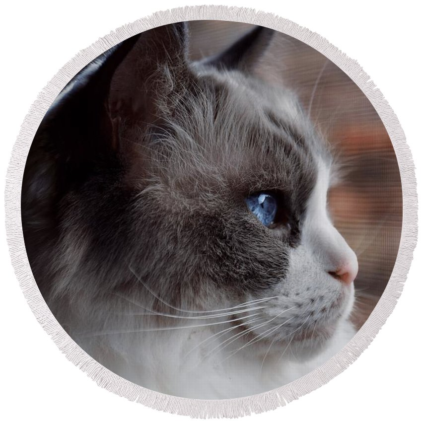 Round Beach Towel featuring the photograph Ragdoll by Emily Miller