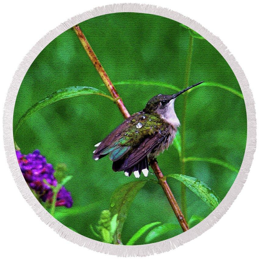 Hummingbird Round Beach Towel featuring the photograph Rain Drops Keep Fallen On My Head by Sue Melvin