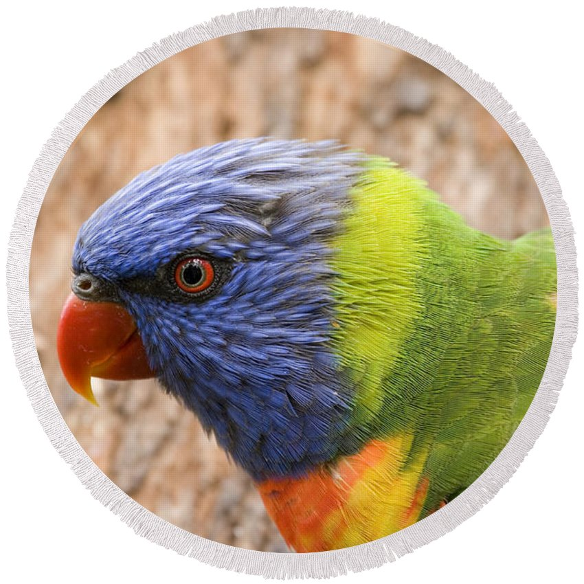 Rainbow Lorikeet Beach Products