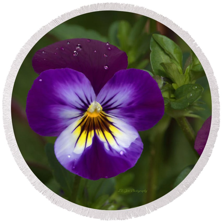 Pansy Round Beach Towel featuring the photograph Raindrops On Pansies by Jeanette C Landstrom