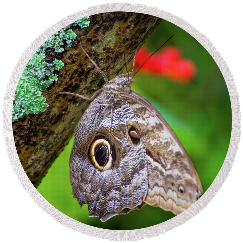 Butterfly Round Beach Towel featuring the photograph Rainforest Butterfly by Mark Andrew Thomas