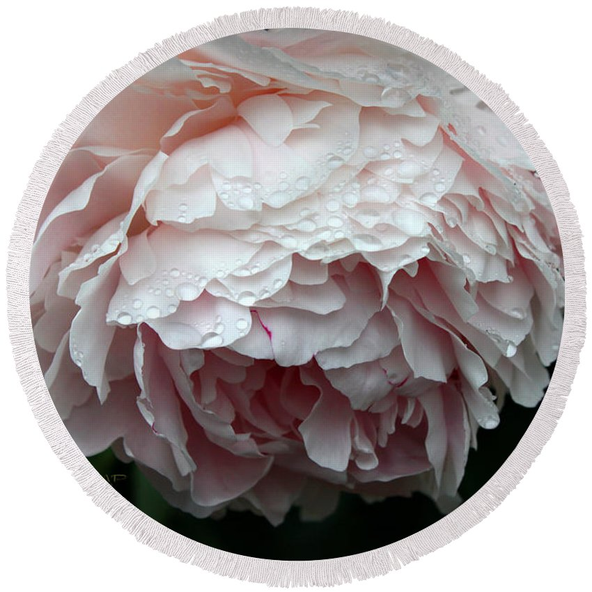 Peony Round Beach Towel featuring the photograph Rainy Day by Jutta Maria Pusl