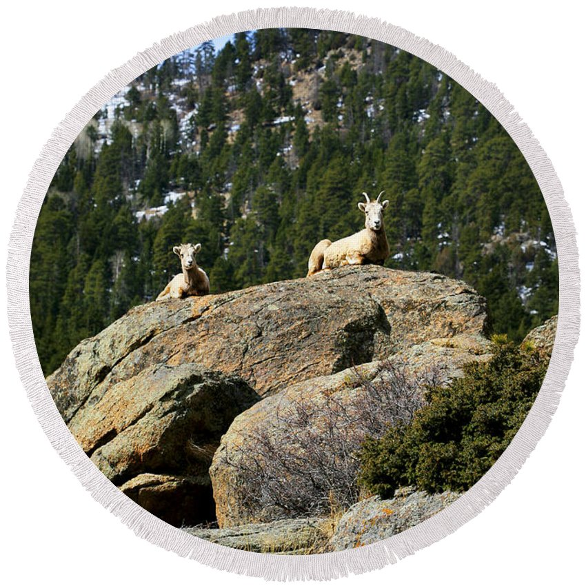 Ram Round Beach Towel featuring the photograph Ram On The Watch by Marilyn Hunt