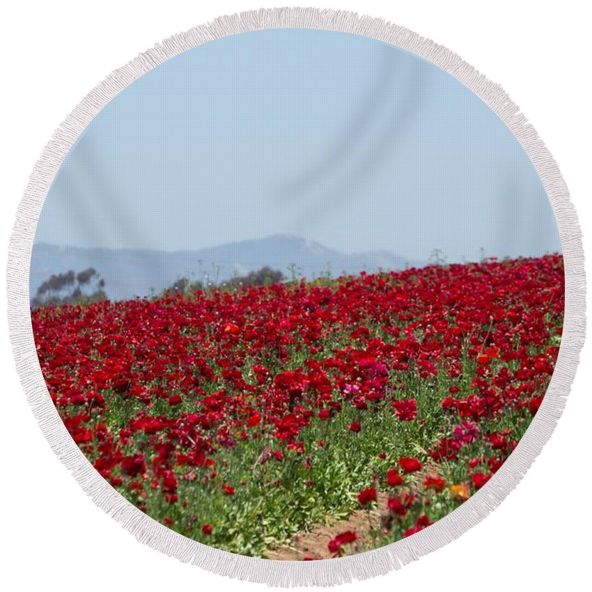 Carlsbad Flower Field Round Beach Towel featuring the photograph Ranunculus Red by Marta Robin Gaughen