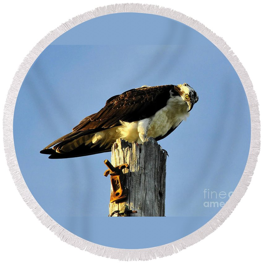 Raptor Round Beach Towel featuring the photograph Raptor's Stare by David Lee Thompson