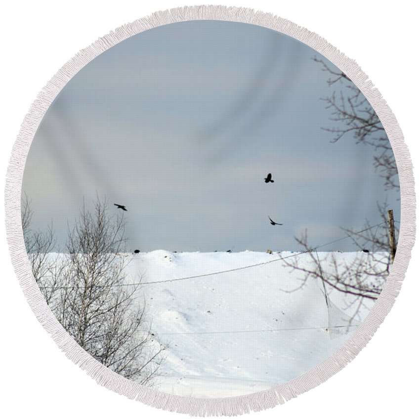 Prowl Round Beach Towel featuring the photograph Ravens On The Prowl by William Tasker
