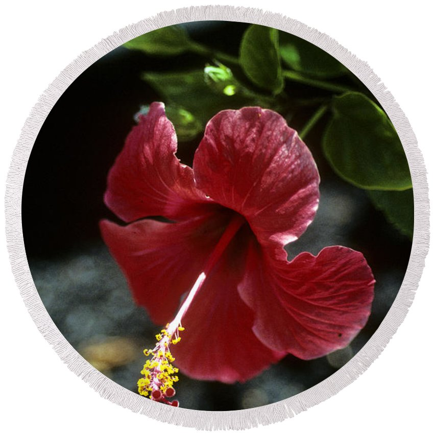 Orchid Round Beach Towel featuring the photograph Ready For Picking by Gary Wonning