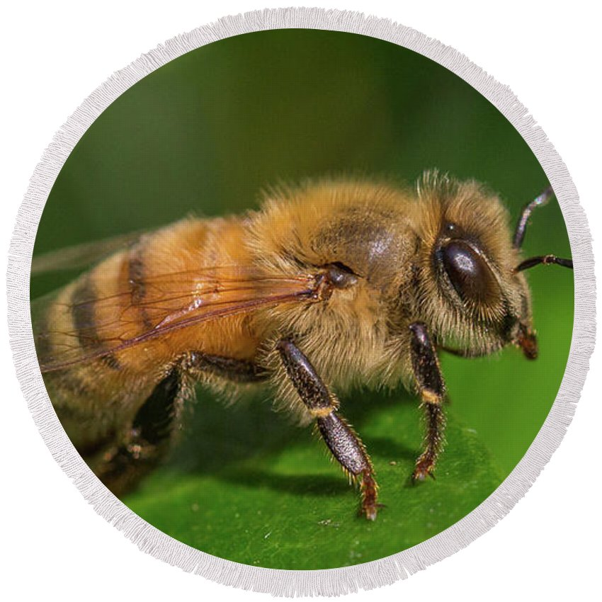 Honey Bee Round Beach Towel featuring the photograph Ready For Take-off, Apis Mellifera by Christy Cox
