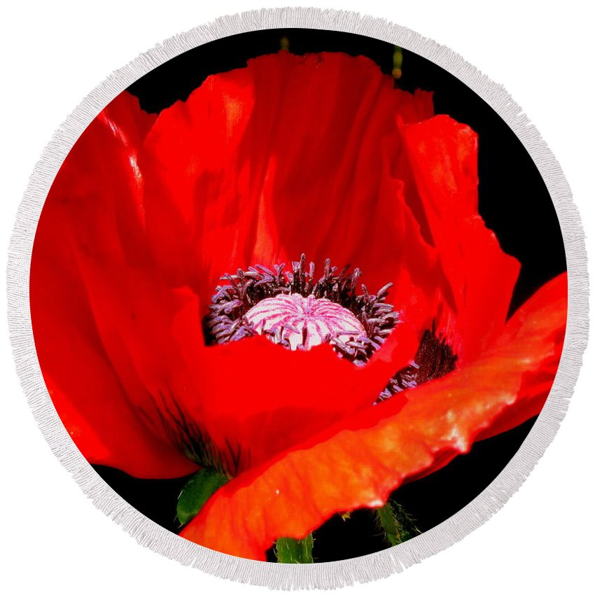 Red Round Beach Towel featuring the photograph Red Poppy Photograph by Kimberly Walker