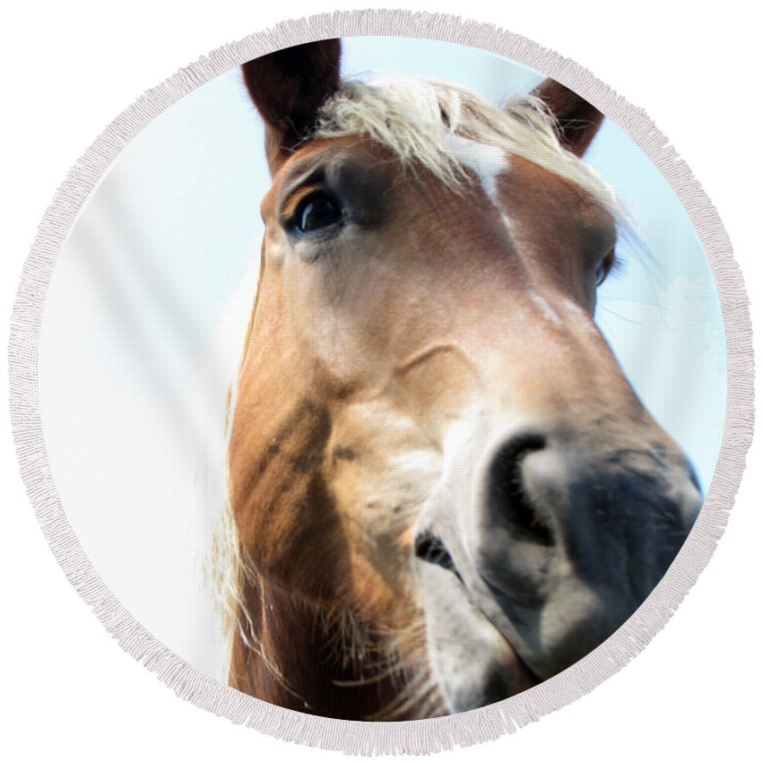 Horse Round Beach Towel featuring the photograph Really by Amanda Barcon
