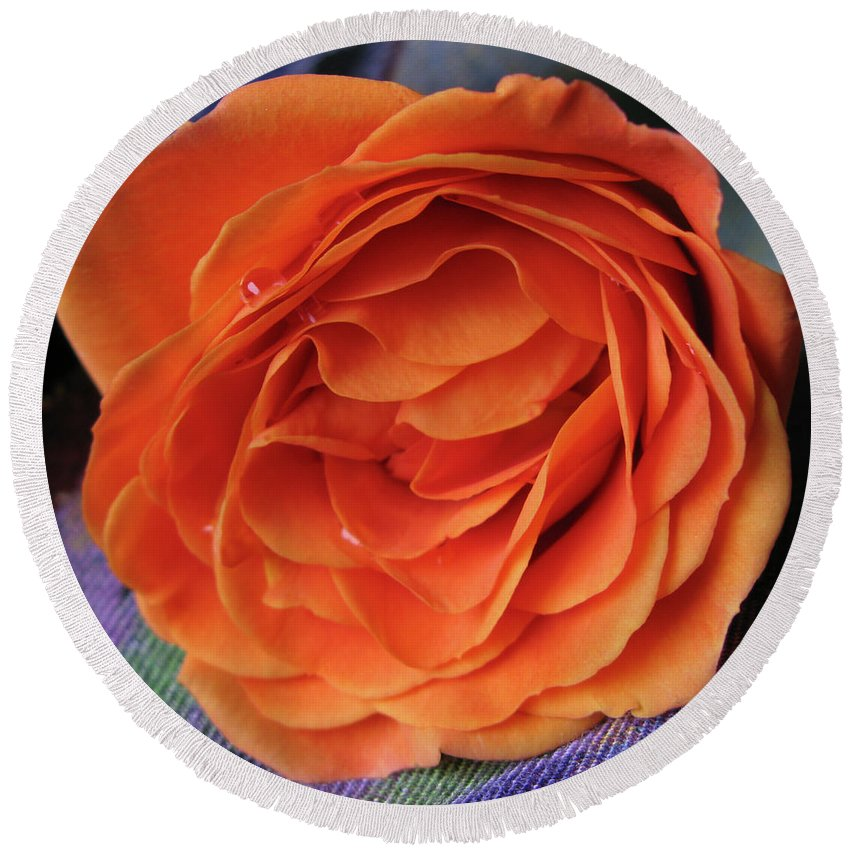 Rose Round Beach Towel featuring the photograph Really Orange Rose by Ann Horn