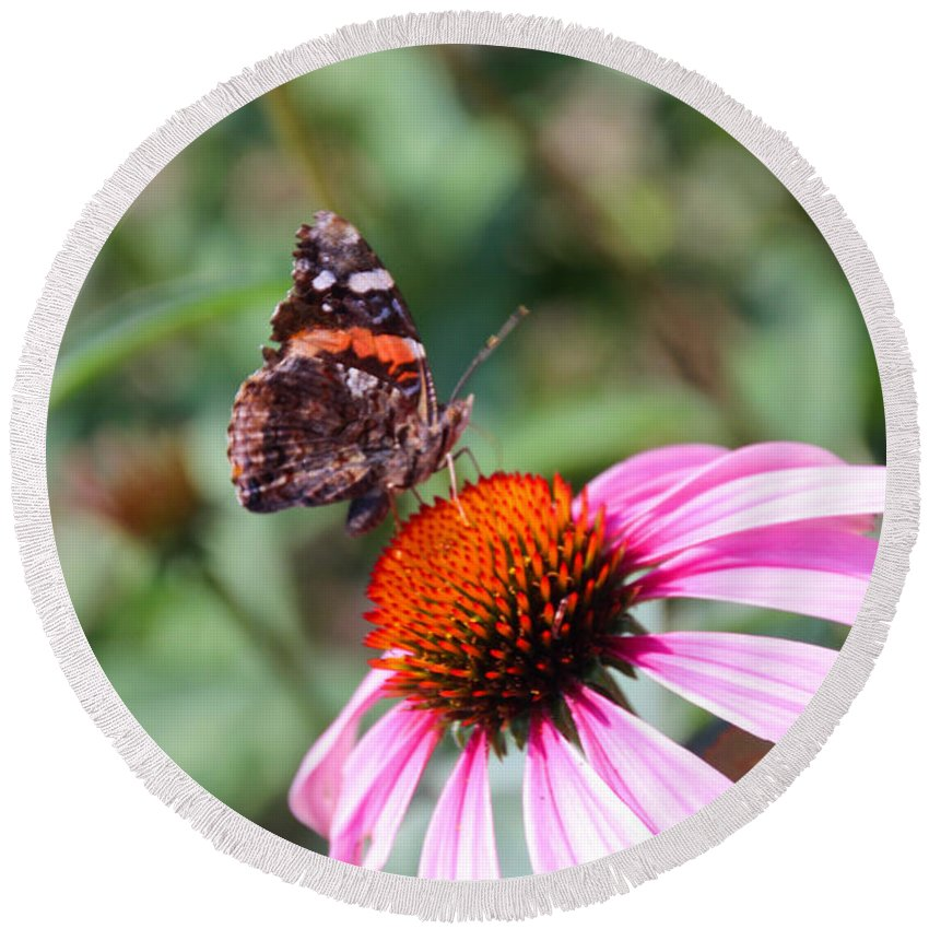 Coneflower Round Beach Towel featuring the photograph Red Admiral 1543 by Carolyn Stagger Cokley