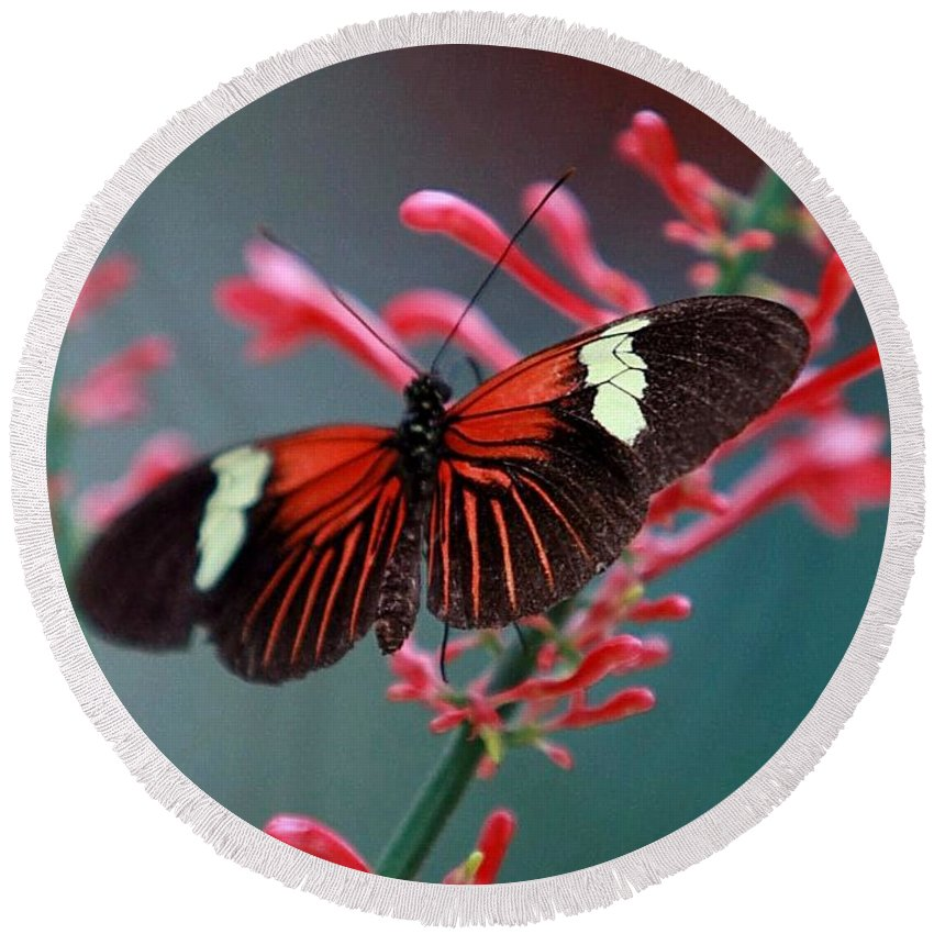Butterfly Round Beach Towel featuring the photograph Red Admiral Butterfly by Randy Matthews