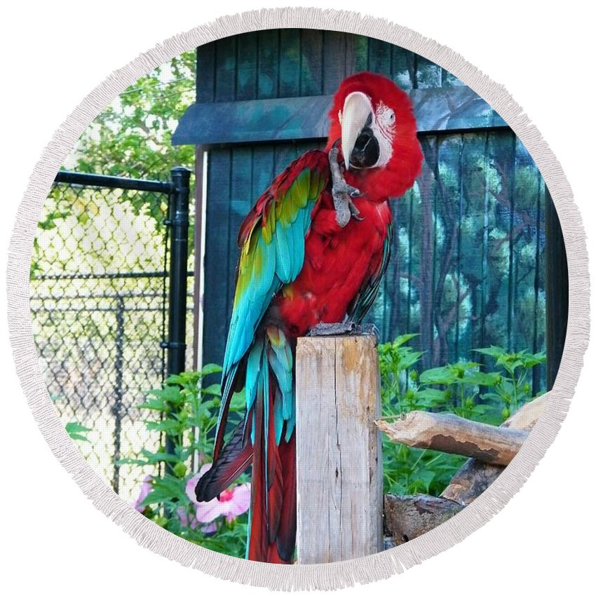 Parrot Round Beach Towel featuring the photograph Red And Green Macaw     Zoo   Indiana by Rory Cubel