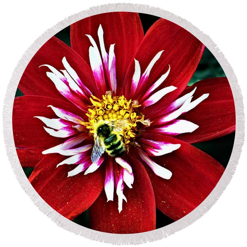 Flower Round Beach Towel featuring the photograph Red And White Flower With Bee by Anthony Jones