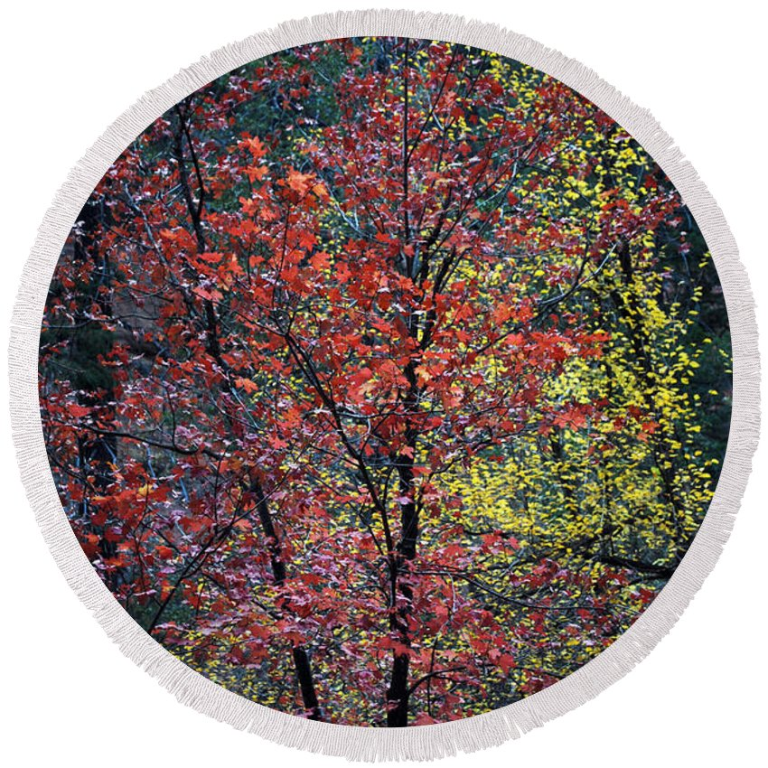 Landscape Round Beach Towel featuring the photograph Red And Yellow Leaves Abstract Vertical Number 1 by Heather Kirk
