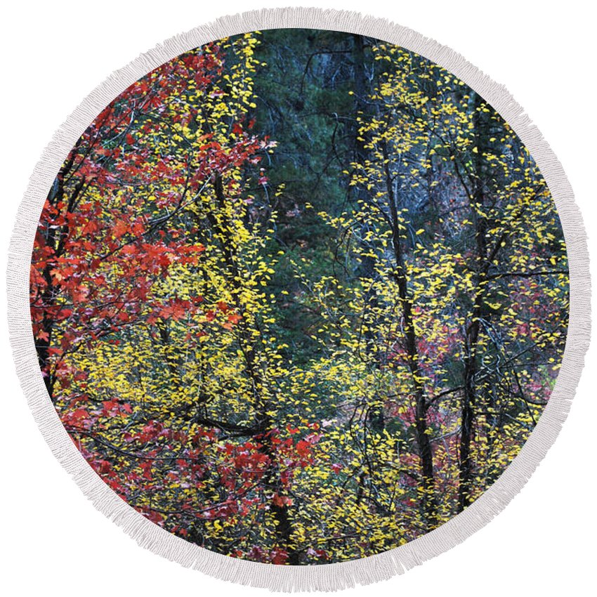 Landscape Round Beach Towel featuring the photograph Red And Yellow Leaves Abstract Vertical Number 2 by Heather Kirk
