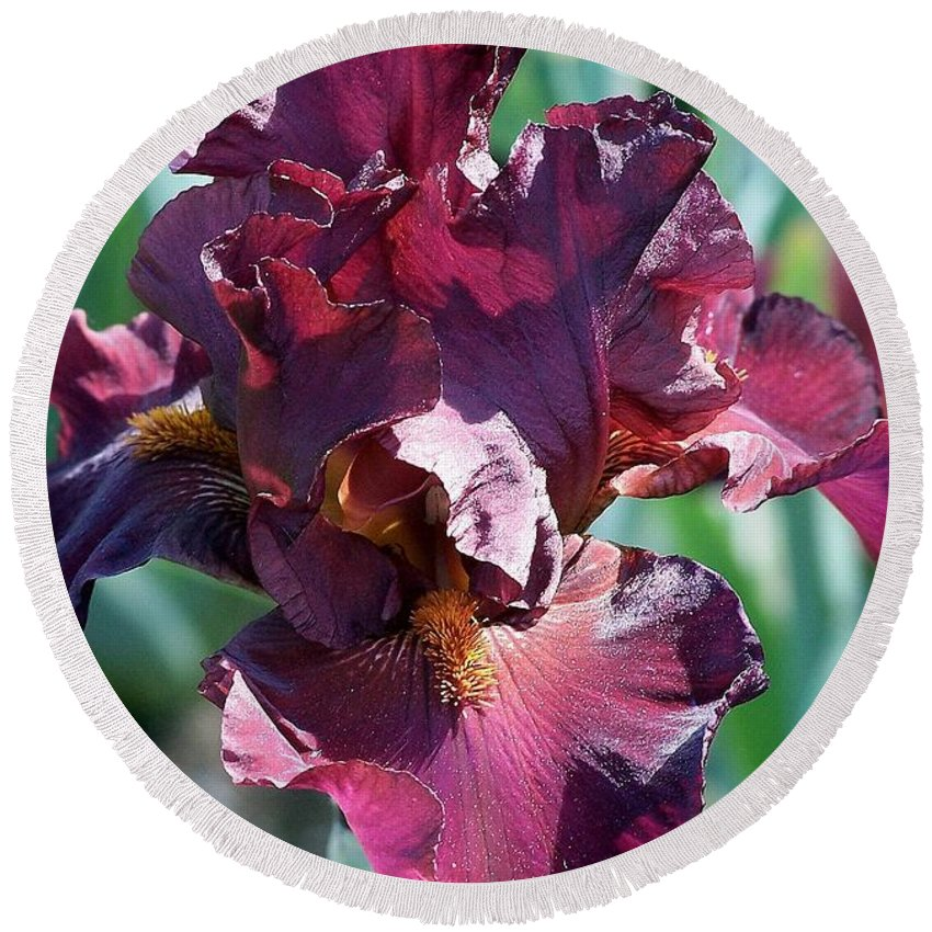 Red Round Beach Towel featuring the photograph Red Bearded Iris Photograph by Kimberly Walker