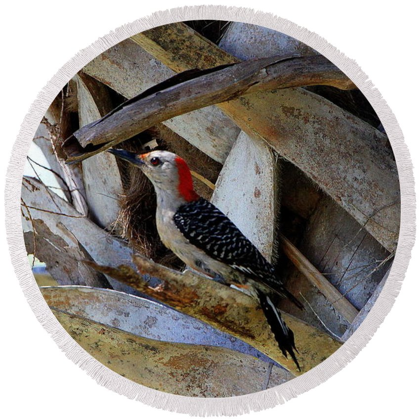 Red-bellied Woodpecker Round Beach Towel featuring the photograph Red-bellied Woodpecker Hides On A Cabbage Palm by Barbara Bowen