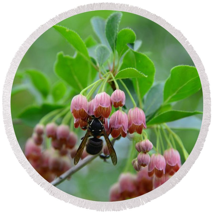 Enkianthus Campanulatus Round Beach Towel featuring the photograph Red Bells And Wasp by Lena Photo Art