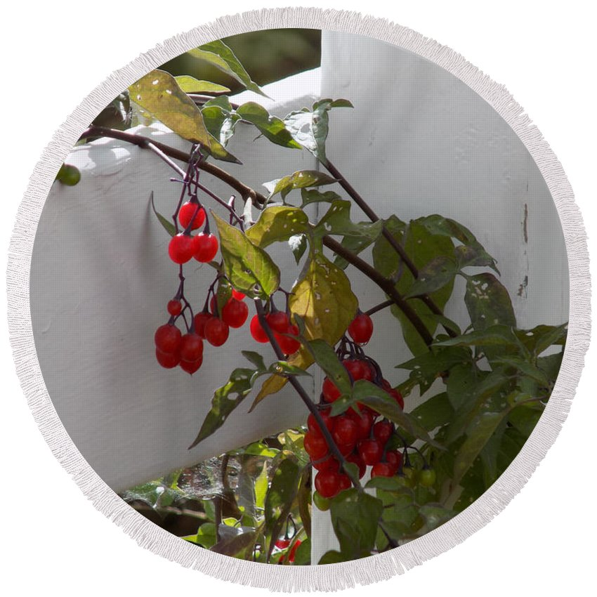 Berries Round Beach Towel featuring the photograph Red Berries On A White Fence by William Tasker