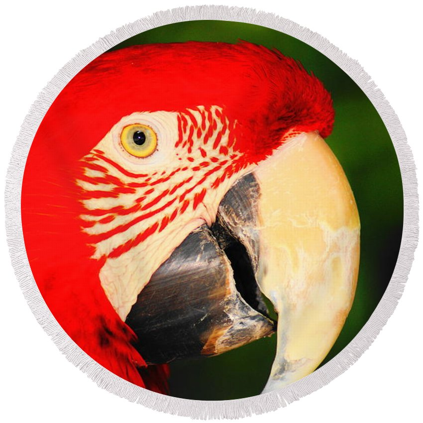 Parrot Round Beach Towel featuring the photograph Red Bird by Daniel Thompson