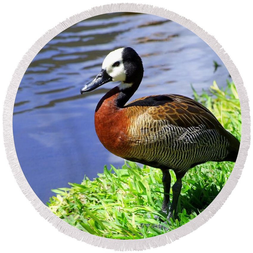 Red Round Beach Towel featuring the photograph Red Breasted Wood Duck by Mary Deal