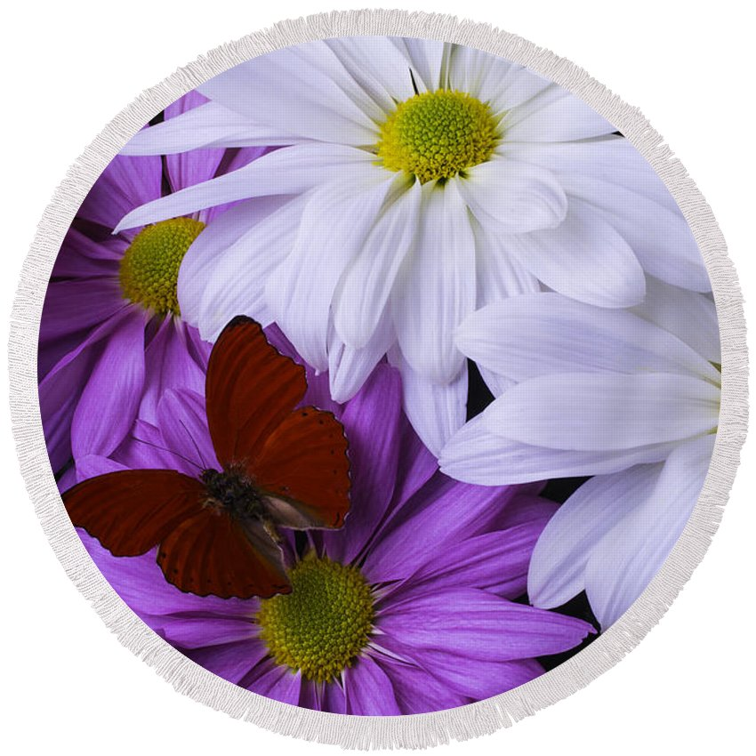 Daisy Round Beach Towel featuring the photograph Red Butterfly On Assorted Mums by Garry Gay