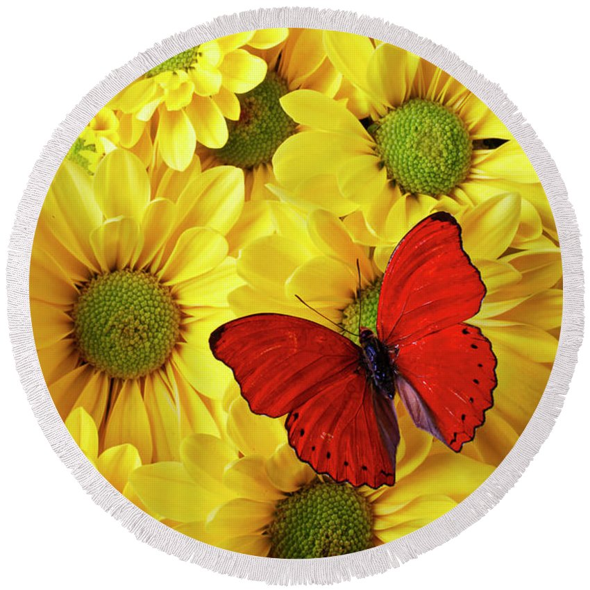 Red Butterfly Yellow Mums Flowers Round Beach Towel featuring the photograph Red Butterfly On Yellow Mums by Garry Gay