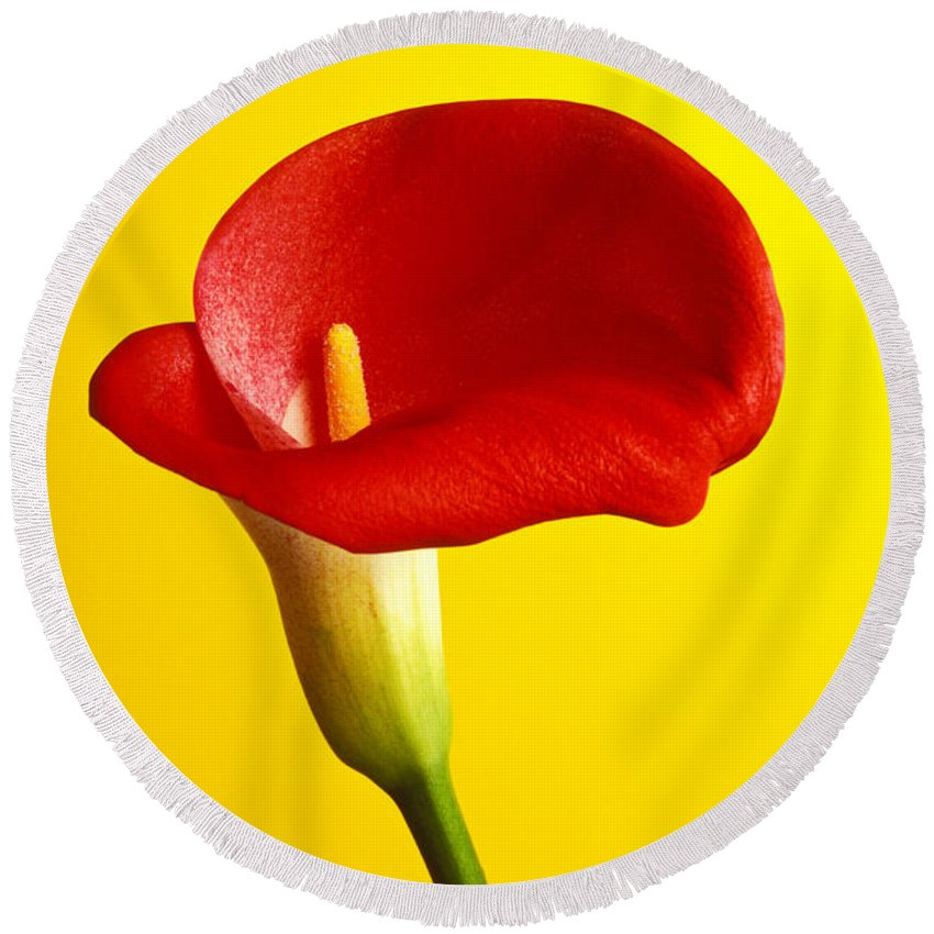 Red Yellow Flower Flowers Calla Lily Lilies Stem Yellow Graphic Design Bright Color Colors Colour Colours Colorful Distinctive Lilum Lilys Arum Bulb Close Up Detail Details Beauty Nature Beautiful Blossom Delicate Fragile Growing Vertical Plant Plants Concepts Decoration Bloom Blooming Botanical Floral Horticulture Floriculture Blossoming Flowering Petal Serenity Stamen Majestic Grow Unusual Round Beach Towel featuring the photograph Red Calla Lilly by Garry Gay
