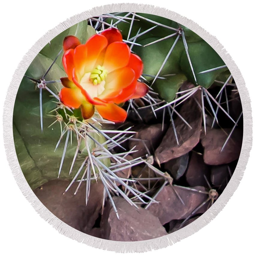 Red Round Beach Towel featuring the photograph Red Claretcup Cactus by Jon Berghoff