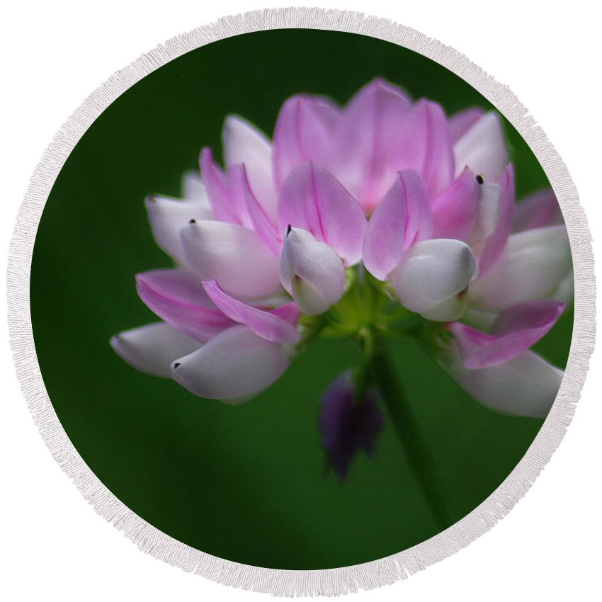 Jenny Gandert Round Beach Towel featuring the photograph Red Clover by Jenny Gandert