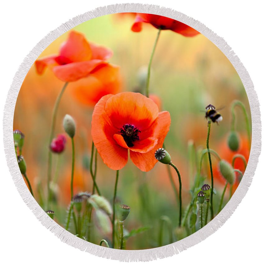 Poppy Round Beach Towel featuring the photograph Red Corn Poppy Flowers 06 by Nailia Schwarz