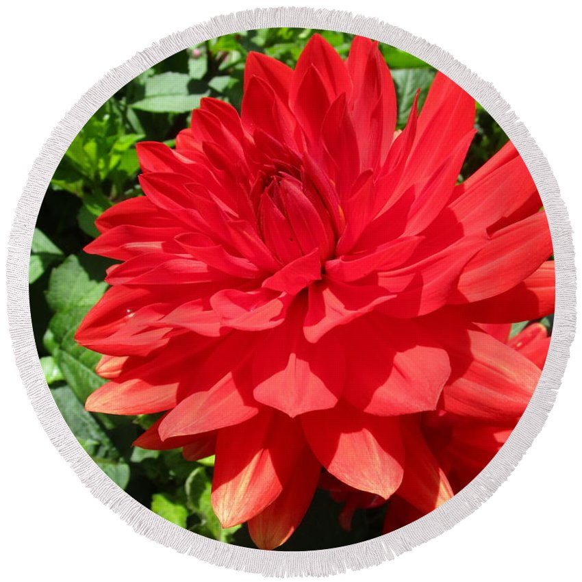 Dahlia Round Beach Towel featuring the photograph Red Dahlia In The Green by Rosita Larsson