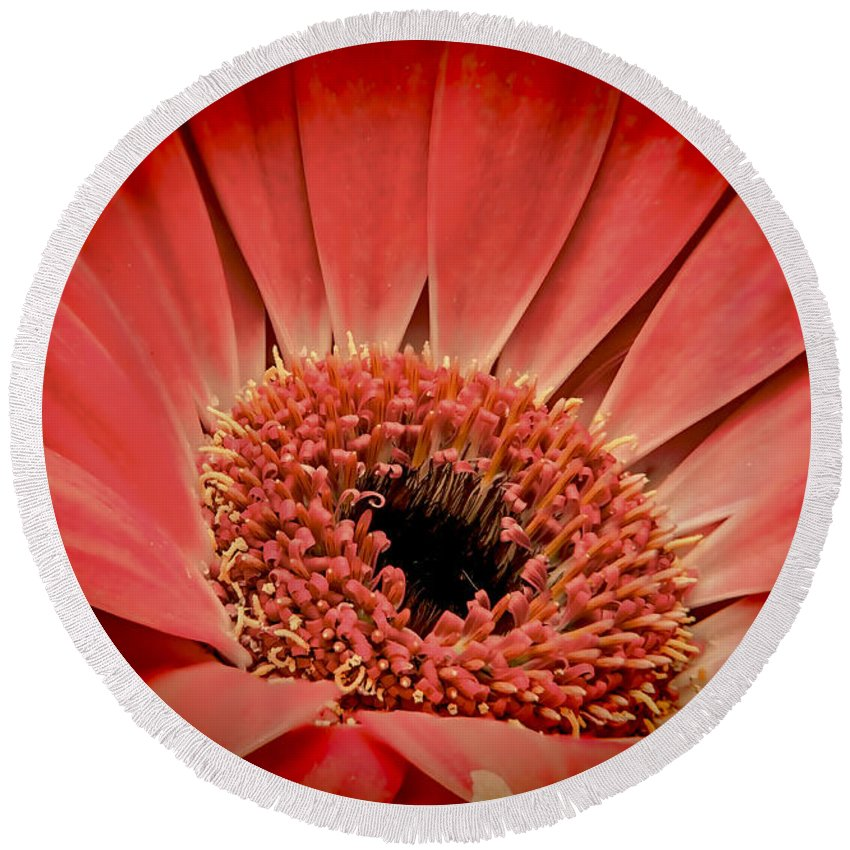 Daisy Round Beach Towel featuring the photograph Red Daisy by Sebastien Coell