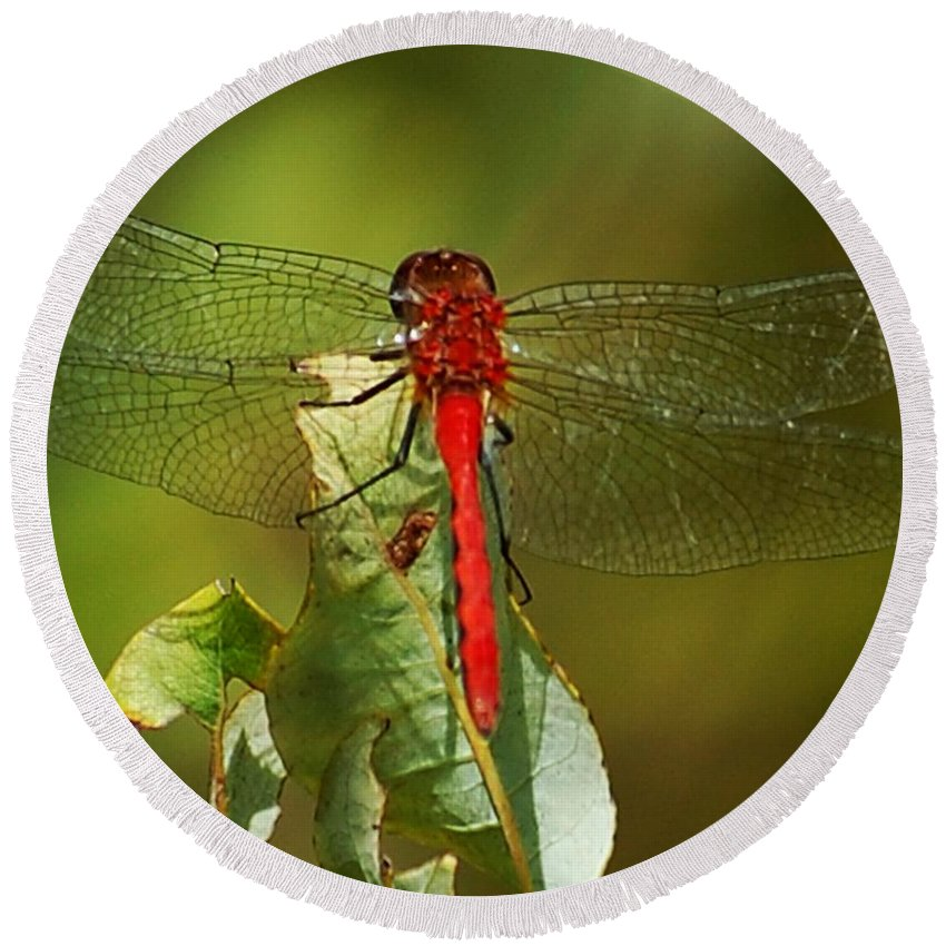 Digital Photograph Round Beach Towel featuring the photograph Red Dragon Fly by David Lane