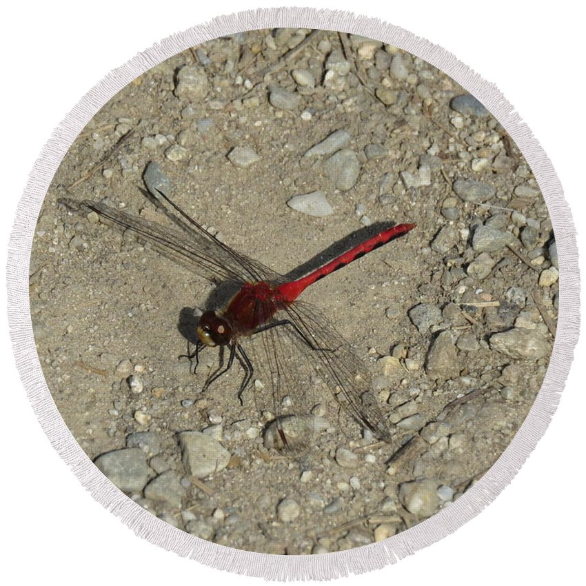 Dragonfly Round Beach Towel featuring the photograph Red Dragonfly by Susan Stumpf