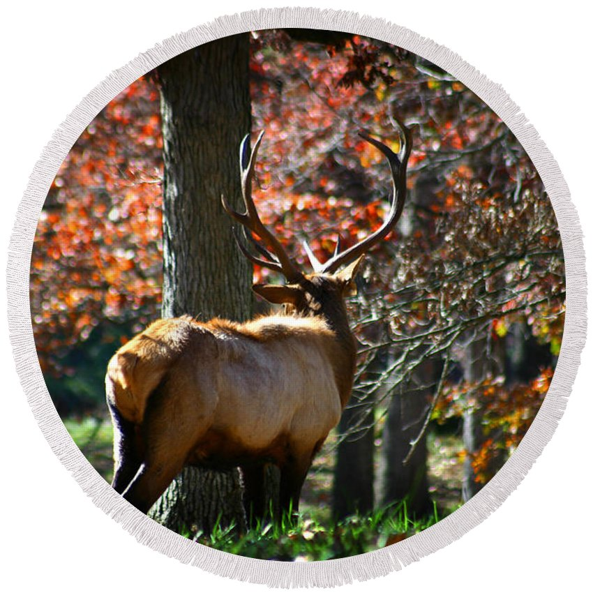 Elk Round Beach Towel featuring the photograph Red Elk by Anthony Jones