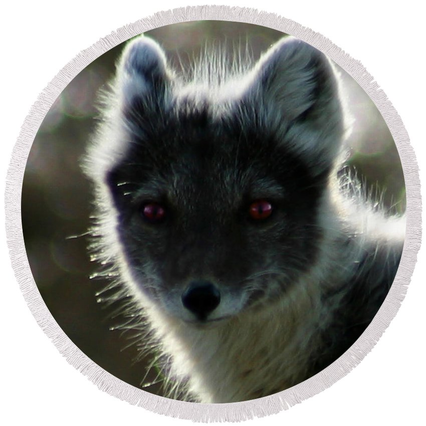 Arctic Fox Round Beach Towel featuring the photograph Red Eyes by Anthony Jones