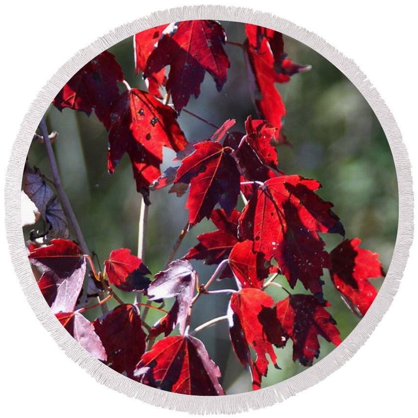 Red Leaves Round Beach Towel featuring the photograph Red Fall Leaves In The Sun by Christiane Schulze Art And Photography